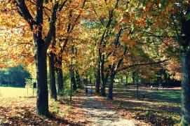 Joggen im Goldener Herbst von Erlangen