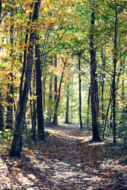 Waldweg_Goldener Herbst Erlangen